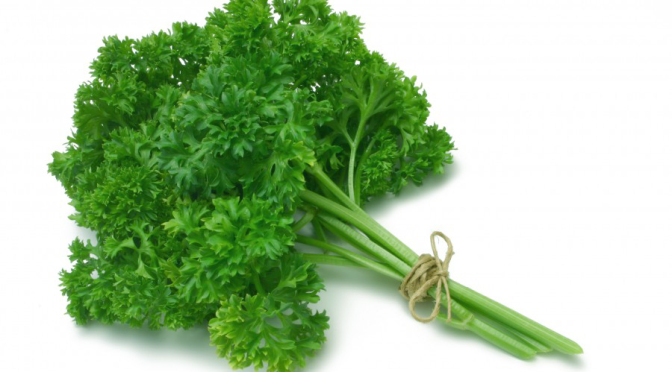 Is the parsley safe for your dog?